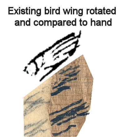 Hand.wing.comparison.1a.jpg