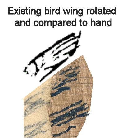 Hand.wing.comparison.1a.jpg